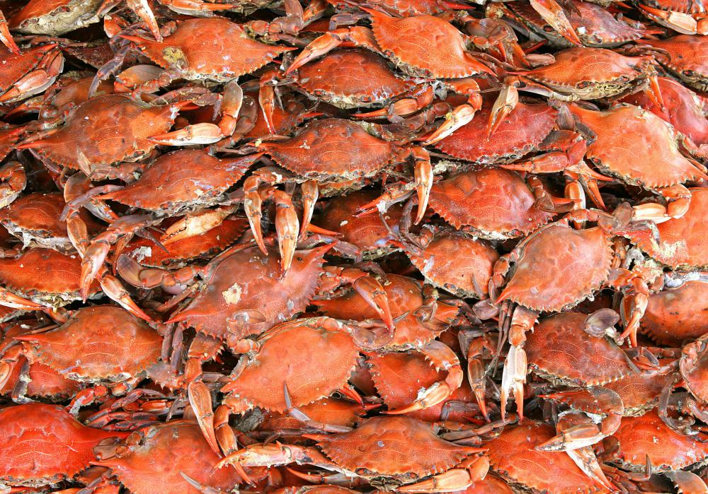 Crab fishing, especially for Alaskan crab, can be mentally and physically exhausting.