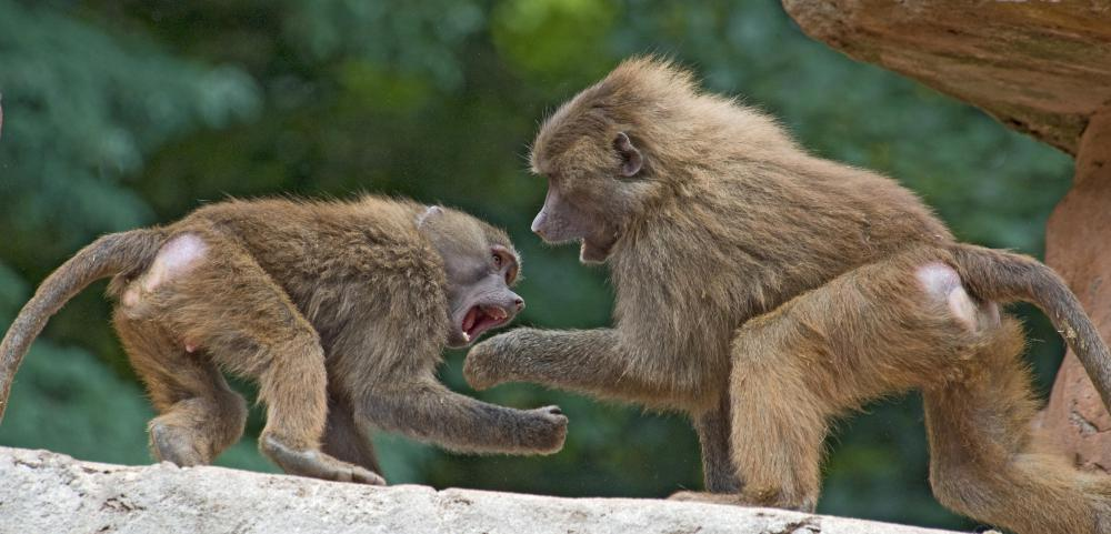 Zoologists may study animal aggression.