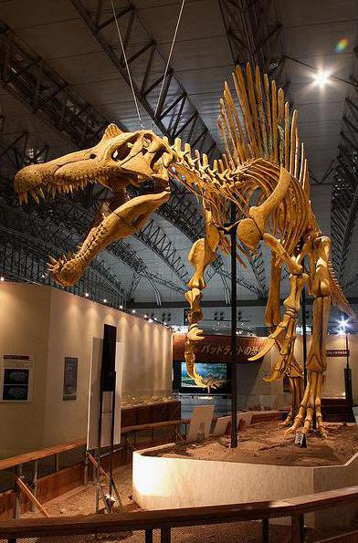 The study of dinosaur fossils falls under a subgroup of paleontology called paleozoology.