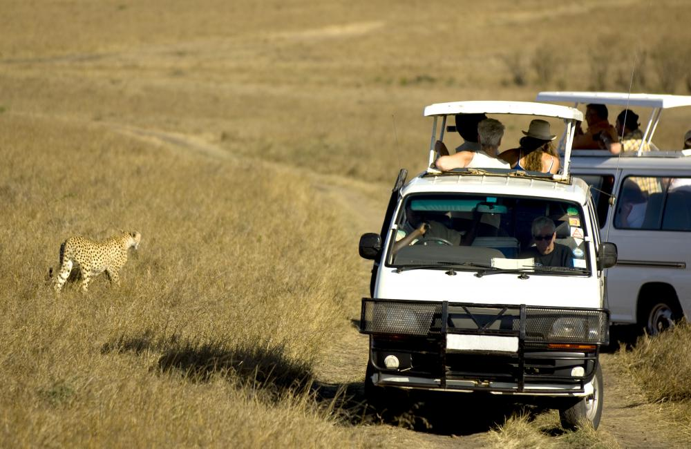 People on a safari, a type of specialist tour.
