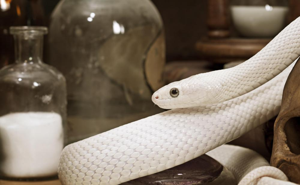 Zoologists may focus on a specific type of animal, such as snakes.